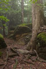 Tree Growing in Rocks