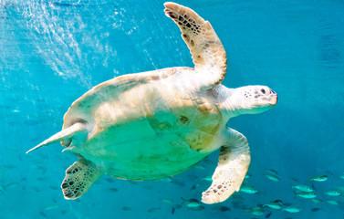 Happy sea turtles
