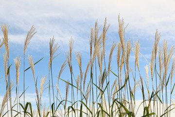 Grass against  sky.