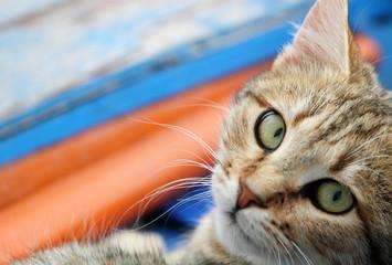 Sguardo felino