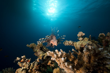 lionfish and ocean.