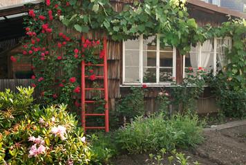 Garten/Sommer