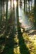 Waldstimmung 1