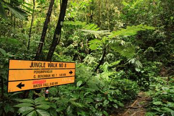 Jungle / Rainforest at Beremban Mountain - Malaysia