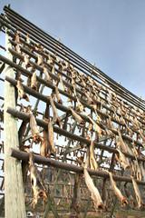 Stockfish on the racks