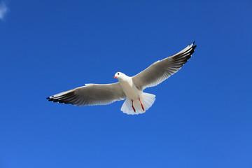 Möwe - Seagull 16