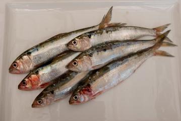 agoni (sardine) di lago