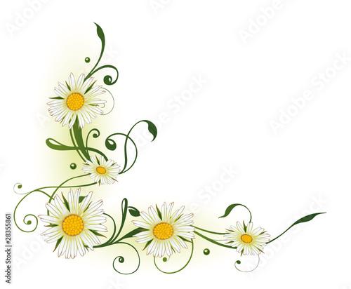 Quot Blumen Bl 252 Ten Ranke Flora Filigran Margeriten