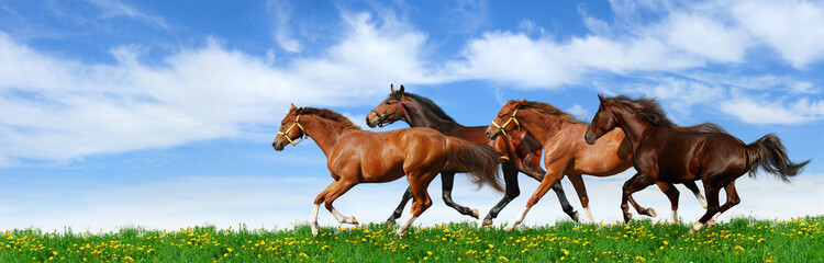 Wall Mural - herd gallops in green field