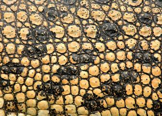 real crocodile skin