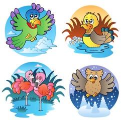 Various cute birds 1