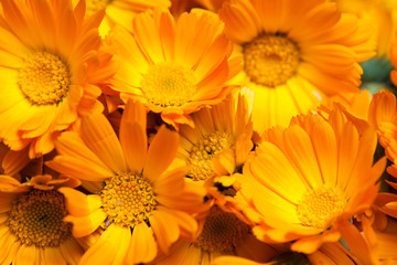 macro of various yellow flowers as background