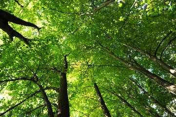 bosco alberi 1444