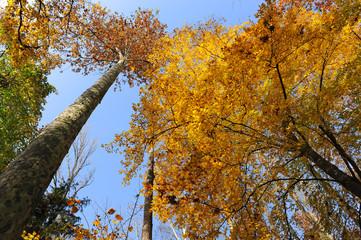 bosco alberi 1487