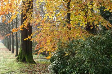 bosco alberi 1488