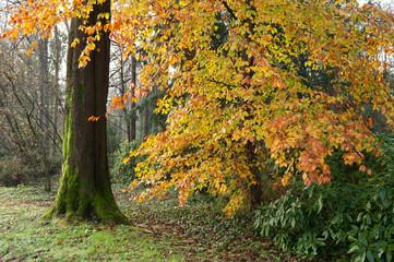 bosco alberi 1489