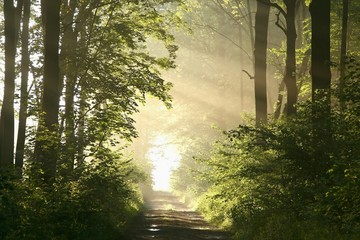 Keuken foto achterwand Bos in mist Dirt road in deciduous forest on a misty spring morning