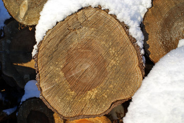 Pine Timber Growth Rings
