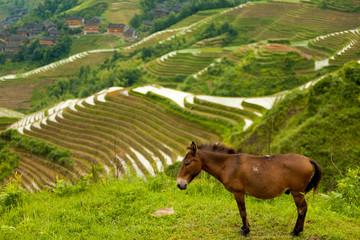 Donkey Rice Terrace Traditional Village Titian Longji