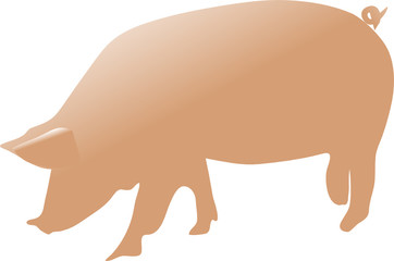 pig color vector illustration