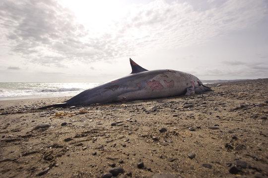 Dead Dolphin 06