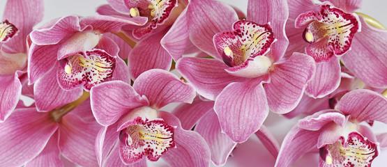 Foto auf AluDibond Orchideen Orchideen, Cymbidium