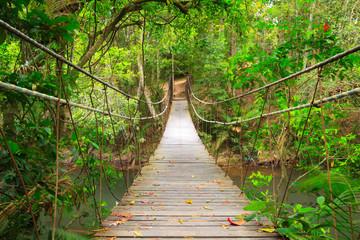 Bridge to the jungle,Khao Yai national park,Thailand - fototapety na wymiar