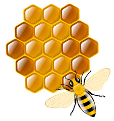 Honey bee and honeycombs