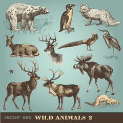 vector set: wild animals 2