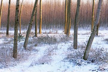 neve paesaggio 1442