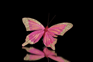 decorative butterfly on a black background