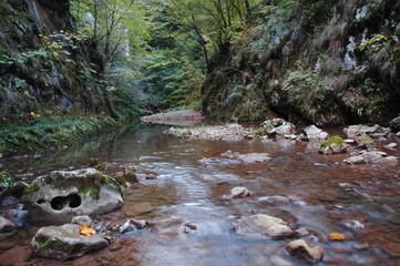Autumn yellow leaves near water stream