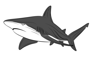 Vector shark, tattoo