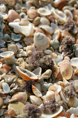 Marine shells background