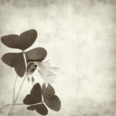 textured old paper background with oxalis flowers and leaves;