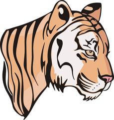 Head of a little tiger cub
