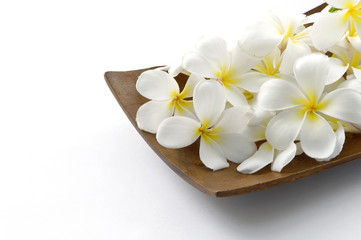 Frangipani flower on bowl.