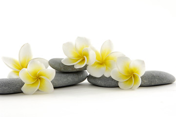 Zen stones with frangiapani flower