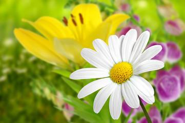 Blumen 185