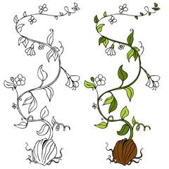 Plant Vine