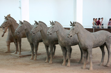 cavalli: di terracotta