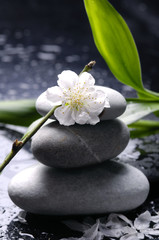 Asia style –spa background
