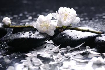 Zen stone and spring cherry with water drops