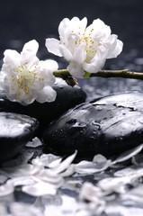 Black stones and flower, petal - Spa still life