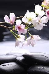 spa still life-cherry flower with zen stones