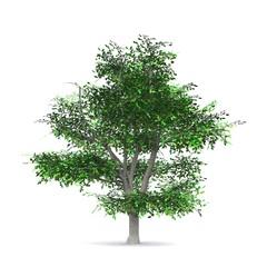 Der Baum - freigestellt 05