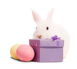 white rabbits with present box