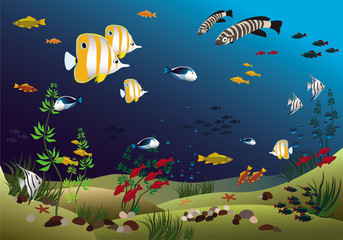 Aluminium Prints Submarine Ocean with beautiful tropical fishes