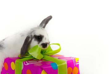 geschenk süß hase