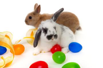 Kaninchen Eier